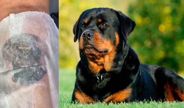 Se hace tatuaje con el rostro de su perro fallecido y el resultado enternece a miles